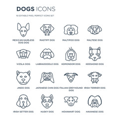 16 linear dogs icons such as Mexican Hairless Dog dog, Mastiff Husky Irish Setter Terrier dog modern with thin stroke, vector illustration, eps10, trendy line icon set.