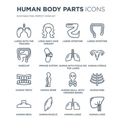 16 linear Human Body Parts icons such as Lungs with the trachea, Long wavy hair variant, Muscle, Neck modern thin stroke, vector illustration, eps10, trendy line icon set.