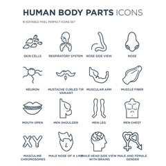 16 linear Human Body Parts icons such as Skin Cells, Respiratory System, Male nose of a line, Masculine Chromosomes modern with thin stroke, vector illustration, eps10, trendy line icon set.