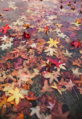 Puddle with autumn leaves