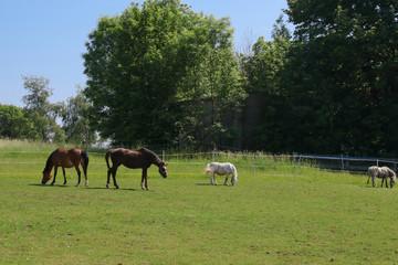 Horse paddock, rural farm idyll in Upper Franconia, Germany