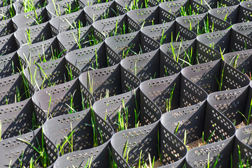 Green grass in a plastic black honeycomb frame to prevent soil erosion on the slope Wall mural