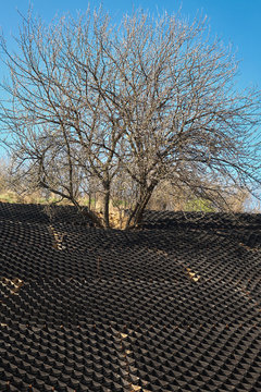 Tree on a hill with a black plastic honeycomb frame to prevent soil erosion on the slope