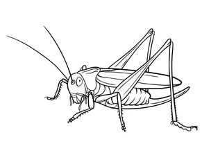 Grasshopper, graphic. Version illustration