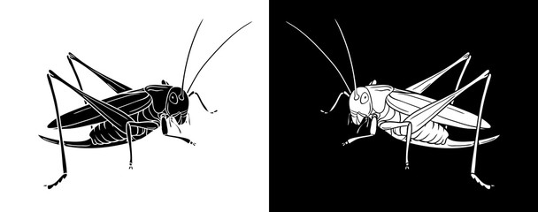 Grasshopper. Insect with flat design and line art black and white version