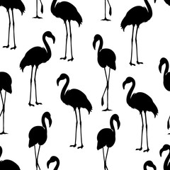Flamingo isolated. Exotic bird. Flamingo silhouette, illustrations