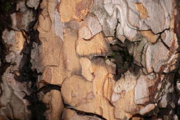 Fototapeta Kora drzewa makro obraz