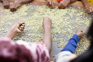 Sitting on either side, rows of women hand select grains from a conveyer belt.