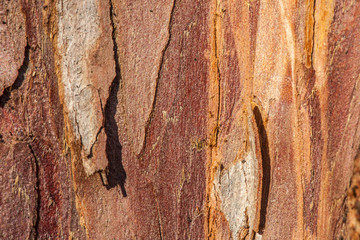 close-up of tree bark