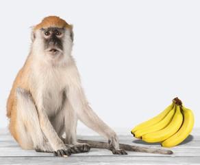 Cute Monkey animal Isolated over white background