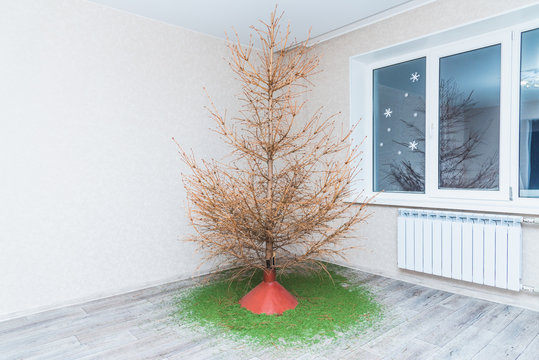 in the room there is a fir tree from which all the needles crumbled