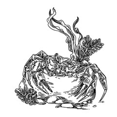 Crab in tropical sea. Sketch. Engraving style. Vector illustration.