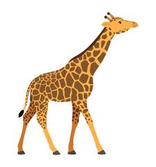 Giraffe walking african animal vector illustration icon isolated on white