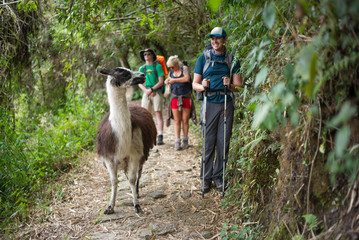 A man walks past a llama on a trail