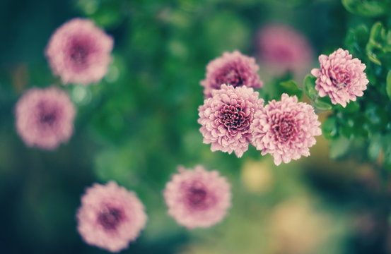 flower in the garden, top view on blured greenery, retro toning