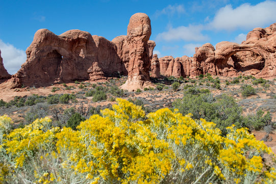 Canyon rocks in national park with yellow flowers in the foreground