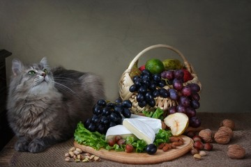Camembert Cheese Still Life and curious gray kitty