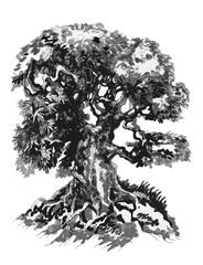Bonsai tree, Ink drawing. Пометка для