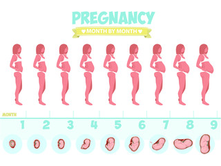 Pregnant beautiful woman vector infographics. Female with fetus in belly.stages of fetal development. Isolated on white background.