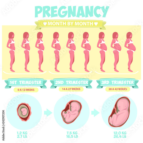 Pregnant beautiful woman vector infographics  Female with
