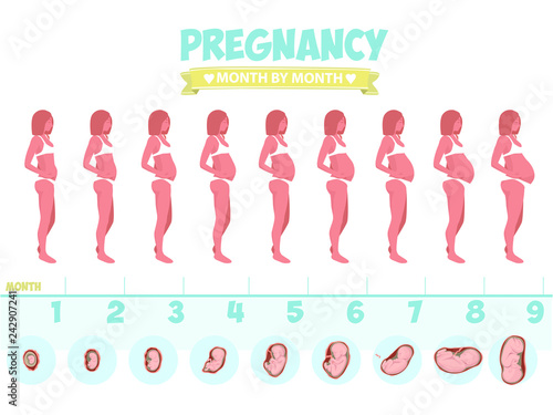 Pregnant Belly Stages