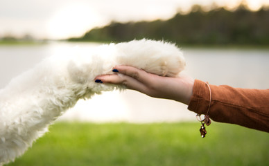 Girls hand holding dog paw
