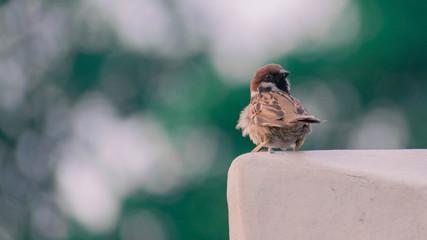 Birds in the garden, parks