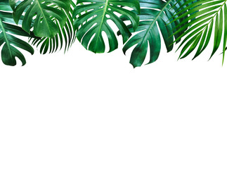 Wall Mural - Summer tropical leaves on white background with copy space