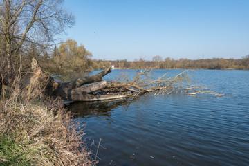 Entwurzelter Baum ragt in einen See - Sturmschaden