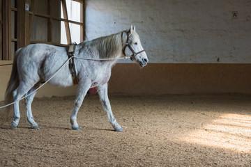 Pferd mit Zaumzeug läuft in einem Reitstall