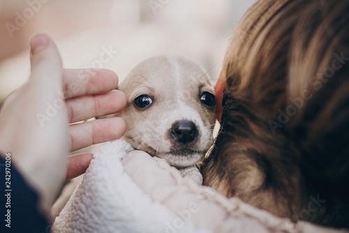 Cute little staff terrier puppy in cozy warm blanket in