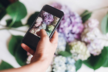 Hand holding phone and taking photo of hydrangea flowers on rustic white wood, flat lay. Content for social media concept, blogging photos. Happy mothers day. International Women's day.