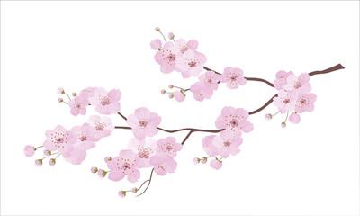 ПечатьJapanese cherry tree sakura flowering branch. Branch with pink blooming flowers
