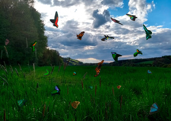 Schmetterlinge-Schwarm Westerwald-Wiese