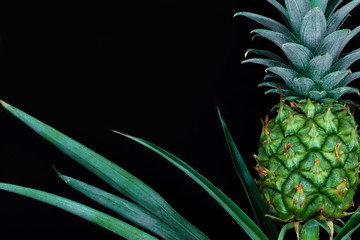 Small and young green growing pineapple isolated on black background with copy space