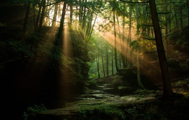 Sun rays peaking through the forest trees