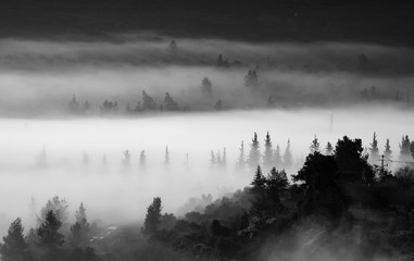 Poster Morning with fog Landscape in Clouds