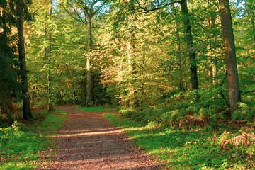 sonniger Waldweg am Morgen. Standort: Deutschland, Nordrhein-Westfalen, Hoxfeld