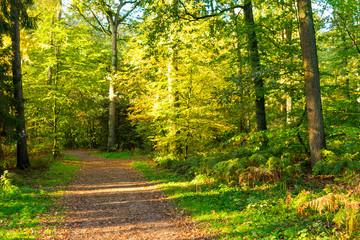 Waldweg am Morgen. Standort: Deutschland, Nordrhein-Westfalen, Hoxfeld