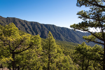 La Palma hiking in trees