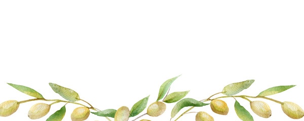 Beautiful lush watercolor banner with olive tree branches with ripe olive berries and green leaves. The composition of the olive tree Aquarelle for the background, texture, pattern wrap