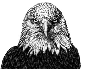 Eagle head - graphic drawing in black outline on a white background