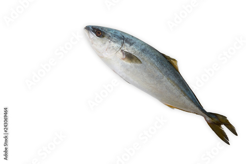 Fresh Fish Hamachi Fish On White Stock Photo And Royalty Free