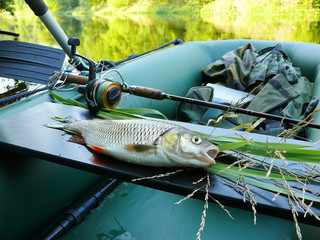 Chub fish in a fishing boat