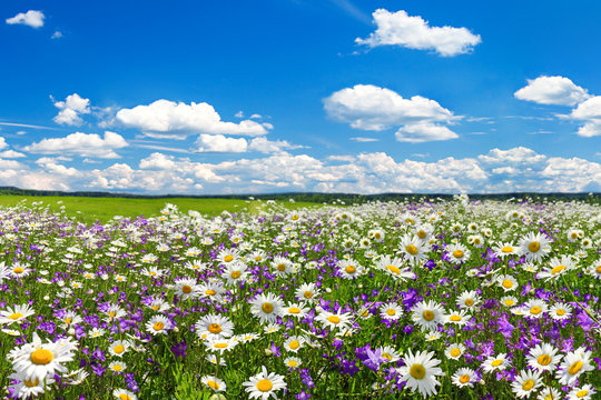 spring landscape with flowering flowers on meadow