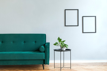 Minimalistic and luxury grey home interior with green velvet design sofa, black coffe table with plant. Copy space for inscription, mock up poster. Brown wooden parquet.