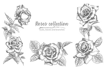 Set of Hand drawn sketch roses, lives and branches Detailed vintage botanical illuatration. Floral frame. Black silhouette isollated on white background.