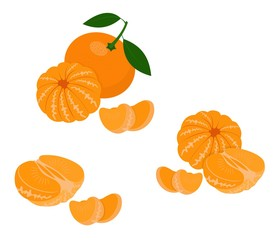 Mandarin, tangerine, clementine with leaves isolated on white background. Citrus fruit. Vector Illustration