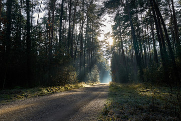 Dark evergreen forest with path going through it and sun lights