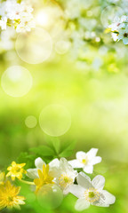 Spring scenery with smal flowers